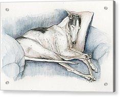 Sleeping Greyhound Acrylic Print by Charlotte Yealey