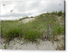 Smugglers Beach Dune South Yarmouth Cape Cod Massachusetts Acrylic Print by Michelle Wiarda
