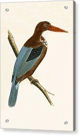 Smyrna Kingfisher Acrylic Print by English School