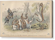 Snakes Acrylic Print by Oliver Goldsmith