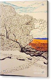 Snow Above The Desert  Acrylic Print by Ishy Christine Degyansky