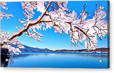 Snow Branch Smith Mountain Lake Acrylic Print by The American Shutterbug Society