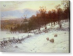 Snow Covered Fields With Sheep Acrylic Print by Joseph Farquharson