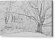 Snow On An Old Ash Tree Acrylic Print by Janice Petrella-Walsh