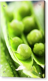 Snow Peas Or Green Peas Seeds Acrylic Print by Vishwanath Bhat