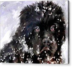 Snow Play Acrylic Print by Jai Johnson