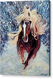 Snow Pony Acrylic Print by Gill Bustamante