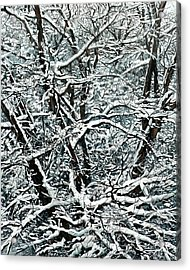 Snow Tree Acrylic Print by Nadi Spencer