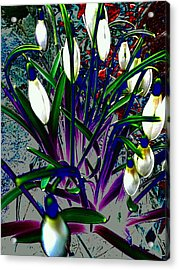 Snowdrops In Abstract  Acrylic Print by Beth Akerman