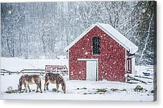 Snowstorm Stowe Vermont Acrylic Print by Edward Fielding