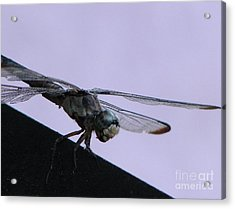 So Many Bugs So Little Time Acrylic Print by Priscilla Richardson