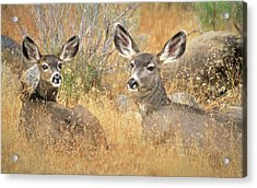 So Much For Your Secret Place... Acrylic Print by Donna Kennedy