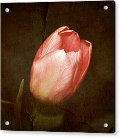 Soft Pink Tulip Acrylic Print by Cathie Tyler
