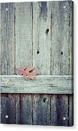 Solitary Leaf On Fence Acrylic Print by Erin Cadigan