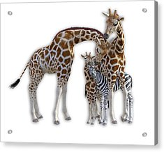 Sometimes You Have To Find The Right Spot To Fit In Acrylic Print by Betsy Knapp