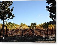 Sonoma Vineyards - Sonoma California - 5d19314 Acrylic Print by Wingsdomain Art and Photography