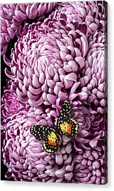 Speckled Butterfly On Red Mum Acrylic Print by Garry Gay
