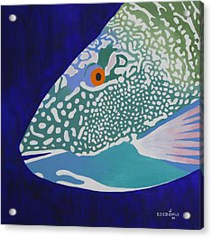 Speckled Parrotfish Acrylic Print by John Edebohls