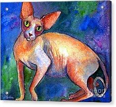 Sphynx Cat 4 Painting Acrylic Print by Svetlana Novikova