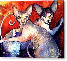 Sphynx Cats Sphinx Family Painting  Acrylic Print by Svetlana Novikova