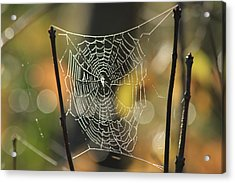 Spider's Creation Acrylic Print by Karol Livote
