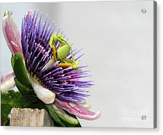 Spikey Passion Flower Acrylic Print by Sabrina L Ryan