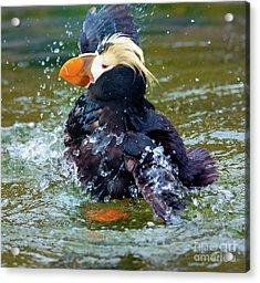 Splish Splash Acrylic Print by Mike Dawson