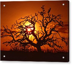 Spooky Tree Acrylic Print by Stephen Anderson