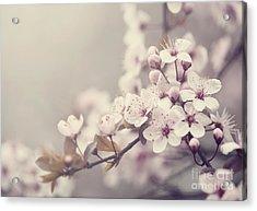 Spring Blossom Acrylic Print by Jelena Jovanovic