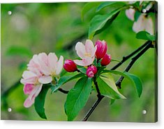 Spring Blossom Acrylic Print by Juergen Roth