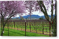 Spring Blossoms Near Calistoga Acrylic Print by Charlene Mitchell