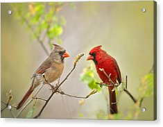 Spring Cardinals Acrylic Print by Bonnie Barry