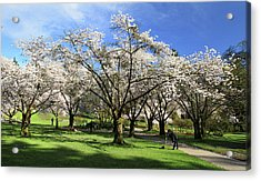 Spring Cherry Blossoms In Stanley Park Vancouver  Acrylic Print by Pierre Leclerc Photography