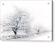 Spring Cherry In High-key Acrylic Print by Jessica Jenney