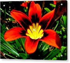 Spring Flower Acrylic Print by Joyce Woodhouse