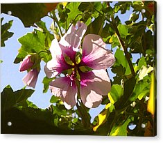 Spring Flower Peeking Out Acrylic Print by Amy Vangsgard