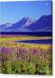 Spring Flowers Lake Tahoe Acrylic Print by Vance Fox