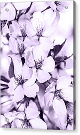 Spring Flowers On Branch Acrylic Print by Toppart Sweden