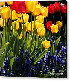 Spring Flowers Square Acrylic Print by Carol Groenen