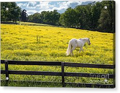 Spring In Tennessee Acrylic Print by Bob Hemphill