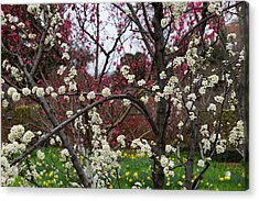 Spring In The Garden Acrylic Print by YT Photo