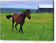Spring In The Pasture Acrylic Print by Bill Willemsen