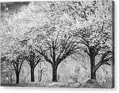 Spring Joy In Black And White Acrylic Print by Debra and Dave Vanderlaan