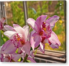 Spring Orchids Photograph Acrylic Print by Don  Wright