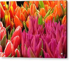 Spring Splash Acrylic Print by Feva  Fotos