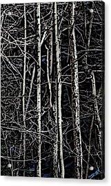 Spring Woods Simulated Woodcut Acrylic Print by David Lane