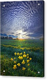 Springing To Life Acrylic Print by Phil Koch