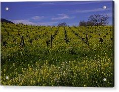 Springtime Vineyards Sonoma Acrylic Print by Garry Gay