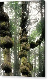 Spruce Burl Olympic National Park Beach 1 Wa Acrylic Print by Christine Till