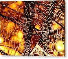 Spun Gold Acrylic Print by Dianne Cowen